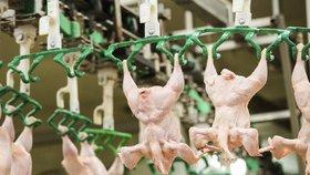 Podnikatel vydával kuřata z Polska za česká. Hrozí mu pokuta až 50 milionů