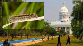 Češi zadržení na Srí Lance jsou na svobodě: Za housenky jim hrozí až půl roku vězení