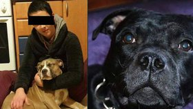 """Stěžovala si, že jí přejeli psa. """"Ludmile psi záhadně umírají,"""" mají podezření chovatelé"""