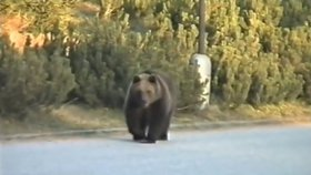 Ve Vysokých Tatrách vyhlášena krizová situace: Medvědi chodí v ulicích!
