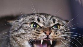 Vlastní kočka jí bránila při vstupu do bytu: Běsnící zvíře museli zajistit policisté