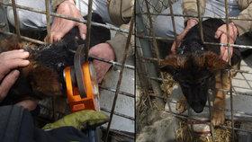 Štěně uvízlo v pletivu: Natřít máslem krk nepomohlo, vysvobodili ho hasiči