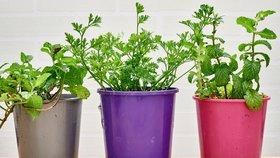 Bylinky na balkoně: Ušetřete místo s nápaditými květináči