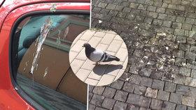 Praha plná holubího trusu. Padá na auta i na zahrádky, nikdo to neřeší