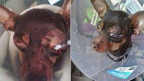 Zasloužila by pár facek: Advokátka z případu Kramný se rozčiluje nad týráním psa