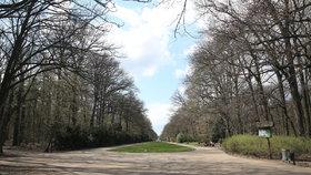 Pod drobnohledem magistrátu: Město chce vědět, kolik lidí chodí do pražských lesů