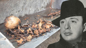 V Přelouči exhumovali ostatky francouzské skladatele: Zemřel při transportu smrti