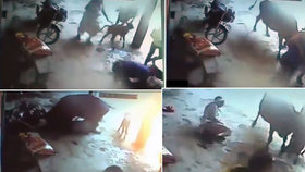 Otec chtěl kvůli cti zavraždit nezletilou dceru: Na útěk ho zahnala rozzuřená kráva