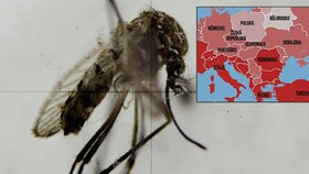 Zika může zasáhnout Evropu na konci jara: Mapa ohrožených zemí