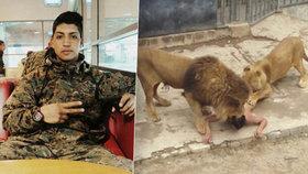 Brutální sebevražda v zoo: Naháč skočil mezi lvy. Věřil, že je prorok a přijde apokalypsa