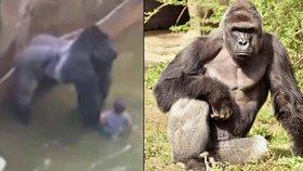 Gorila popadla v zoo chlapce (4): Primáta museli zastřelit