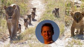 Odkaz krále safari, jehož v Zimbabwe před rokem skolil zubař z USA: Tak rozkošná jsou vnoučata lva Cecila!