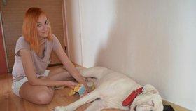 Největší horka jsou tady: Jak zachránit psa při přehřátí?