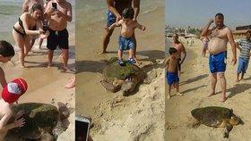 Vytáhli želvu z moře kvůli selfie: Děti po ní skákaly a zlomily jí lebku