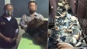 Foto jen pro otrlé! Americká firma zmasakrovala desítky psů po ukončení spolupráce s ropnou společností