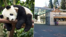 V trojské zoo vyroste nový domov pro gorily i pandy. Magistrát dá stovky milionů