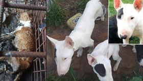 Chovatelka hlady utýrala několik psů: Kam se poděli ti, co přežili, a jak se teď mají?