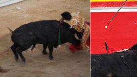 Divoká korida: Zkrvavené genitálie, uřezané uši a půltunový býk