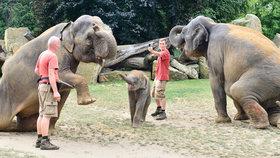 Sloni zapózovali: Vznikly 360 stupňové fotografie Maxe, jeho mámy a Tamary