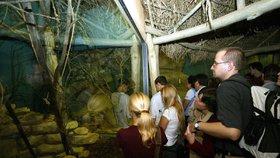 Spí, hrají si nebo loví: Co dělají zvířata v Zoo Praha po večerech? Zjistíte to na speciálních prohlídkách
