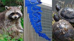 """""""Zlá EU zabíjí zvířátka?"""" Mývalové ani želvy trpět nebudou, tvrdí ministerstvo"""
