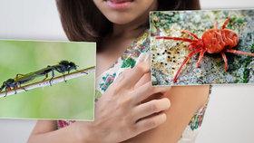 Sezona komárů končí, ale.... pozoro na muchničky a sametky!