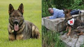 U Letohradu zmizel záchranářský pes Tai: Pomozte s pátráním!