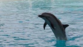 """Lepší mrtvý než ruský? Ukrajinští delfíni po anexi Krymu """"drželi hladovku a zemřeli"""""""