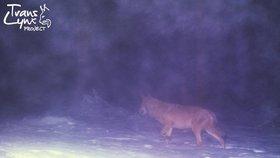 Fotopasti na rysy a vlky rozkradli zloději. Ochránci na Šumavě zuří