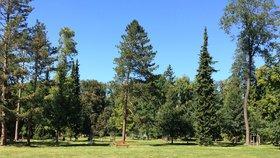 Stromovku ještě letos zvelebí. Praha díky soutěži ušetřila přes 17 milionů