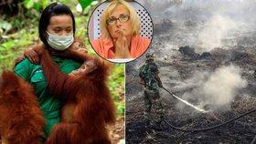 """Palmový olej je zlo, bouřili v sídle EU. """"Zvířata umírají, vyvolení bohatnou"""""""
