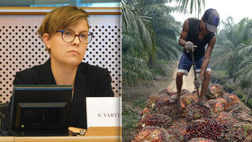 Migranti na plantážích, hladové děti i vraždy. Palmový olej rozvášnil experty