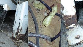 Odpadky, myší bobky i metr plísně: Inspekce v létě zavřela 18 podniků hrůzy