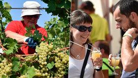 Jaké víno pijeme nejraději? Vybíráme raději sladší odrůdy!