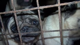 Za týrání zvířat až 5 let natvrdo. Britové vyslyšeli volání po přísných trestech, Češi se hádají