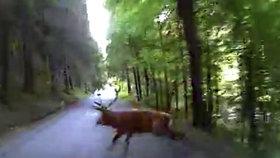VIDEO: Plzeňská záchranka jela pro zraněného motorkáře: Do cesty jim skočil jelen