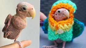 Papoušek je hvězdou internetu: Vypadá jako oškubané kuře!