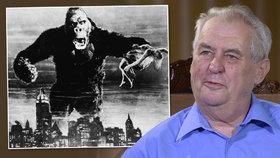 Zeman se pohádal o hradní kandidatuře. Řekne lidem, že je King Kong?