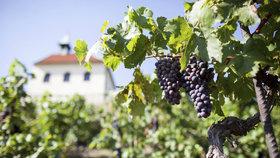Půl století rozkvětu: Botanická zahrada v Troji slaví kulatiny unikátním vínem i novými plány