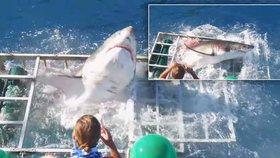 Žralok se prorval k potápěči do klece, pak se všude objevila krev