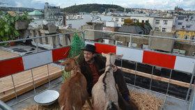 Česko se stalo 7. nejlepší zemí pro život. Zaujaly Kobzovy kozy