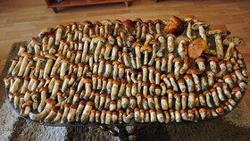 Košíky přetékají houbami: Díky počasí rostou hřiby, ryzce i klouzky
