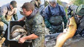 Vánoční kapři, štika i sumec. Rybáře v Uhříněvsi překvapily úlovky z rybníka Martínek