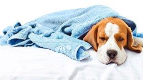 Nastydnout může i vás pes! Jak nachlazení poznat a léčit?
