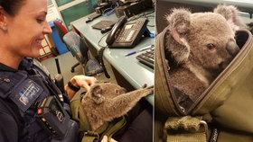 Rozevřeli zip a z kabely vykoukla koala. Zatčená žena překvapila policii