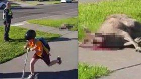 Policista bez milosti zastřelil malého klokana: »Popravě« přihlíželo malé dítě