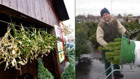 Velký přehled cen vánočních stromků. Nejvyšší stojí třeba i čtyři tisíce