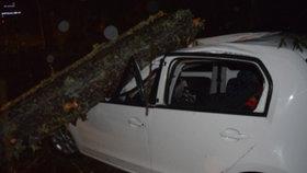 Mladíka ze Singapuru, který studoval v Ostravě, zabil strom. Rodiče darovali jeho orgány těžce nemocným