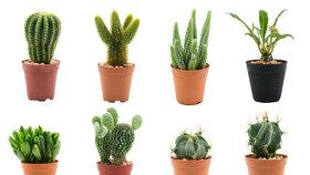 Přezimování kaktusů: Které potřebují teplo a které  naopak zimu?