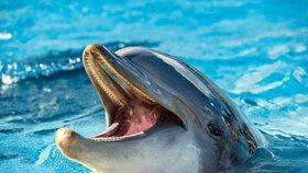 Turisté nemohli týden do moře: Zákaz koupání kvůli »nadrženému« delfínovi!